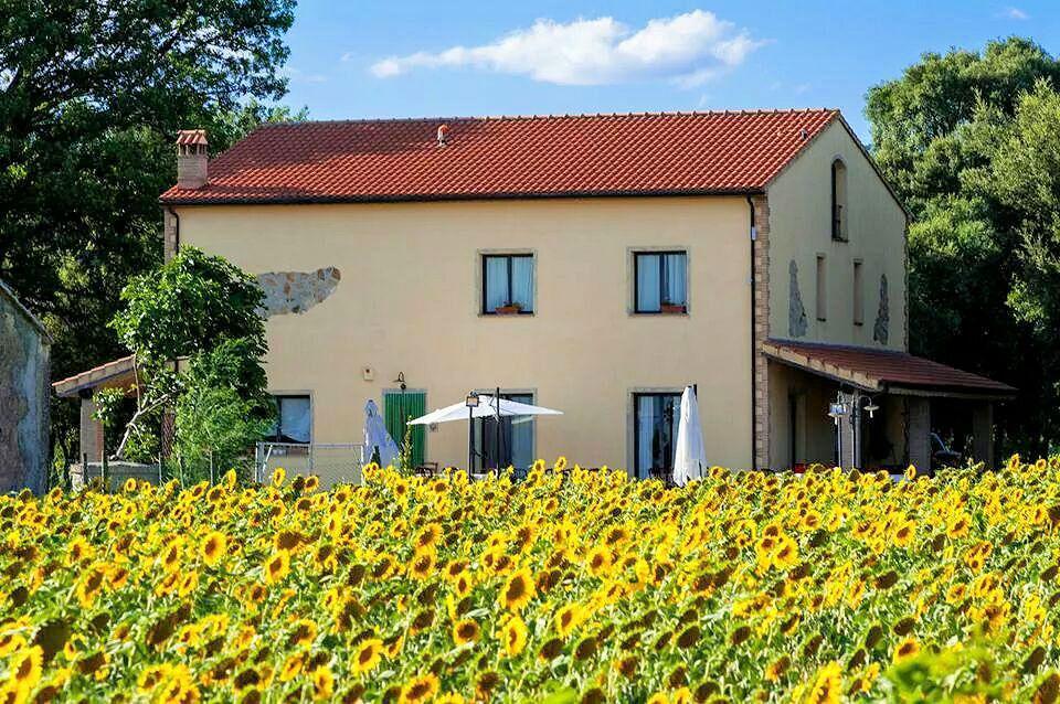 1031-Casale con dependance parco e piscina-Roccastrada-17 Agenzia Immobiliare ASIP