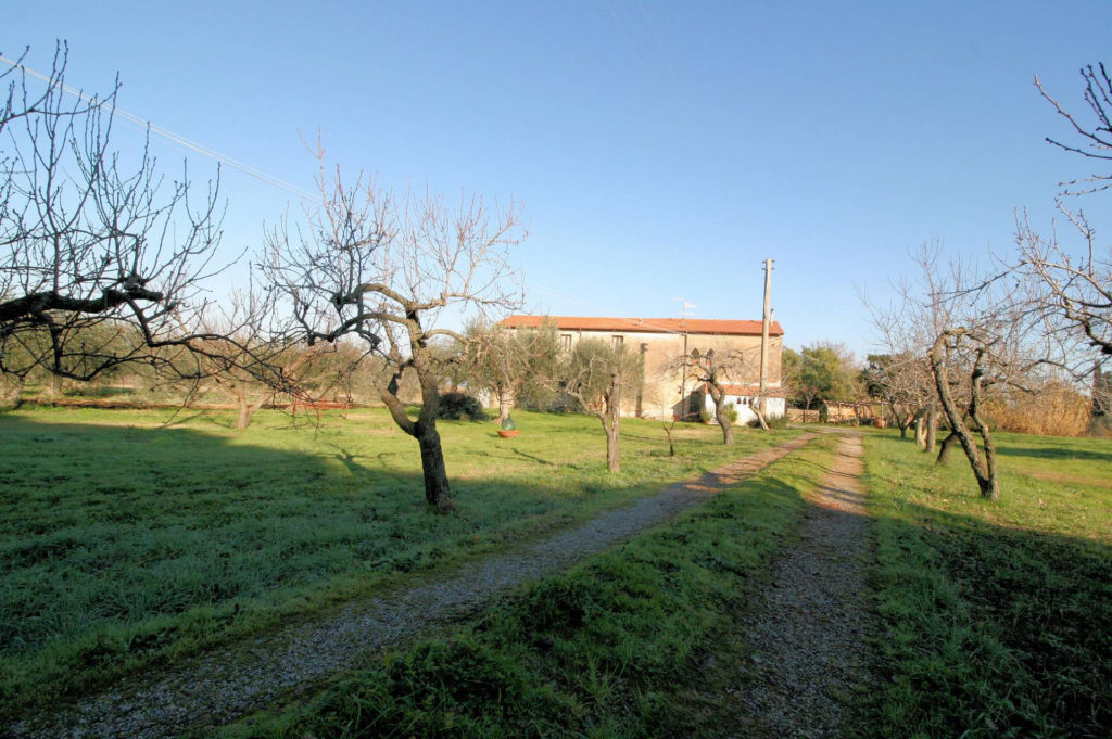 1132-Podere in Maremma-Scarlino-3 Agenzia Immobiliare ASIP