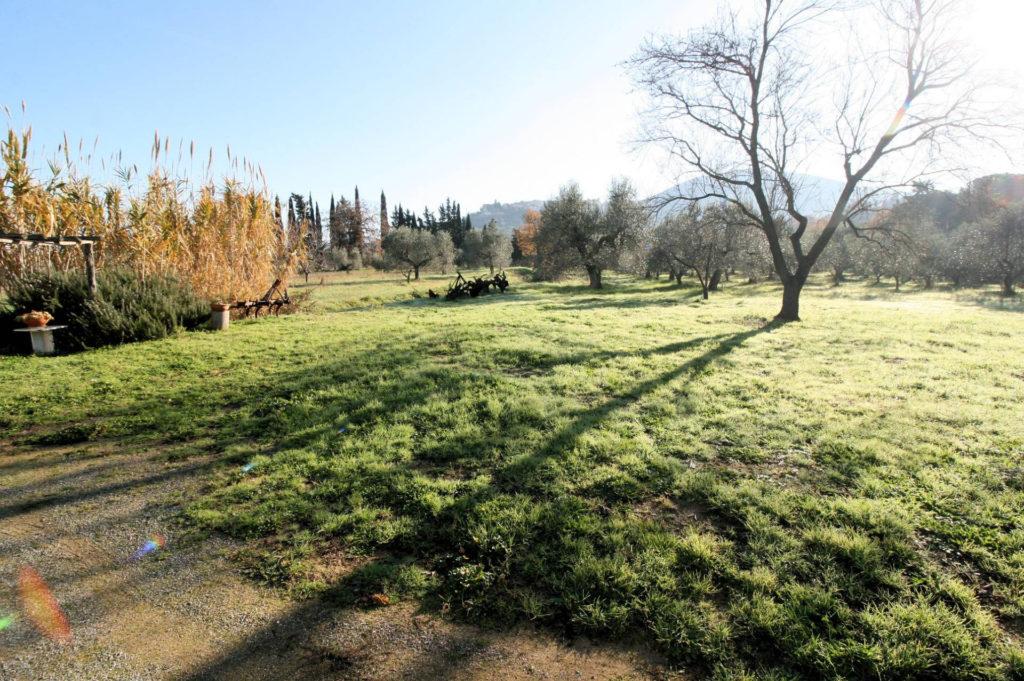 1132-Podere in Maremma-Scarlino-15 Agenzia Immobiliare ASIP