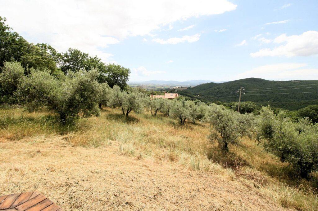 1157-Annesso agricolo con vista panoramica-Roccastrada-3 Agenzia Immobiliare ASIP