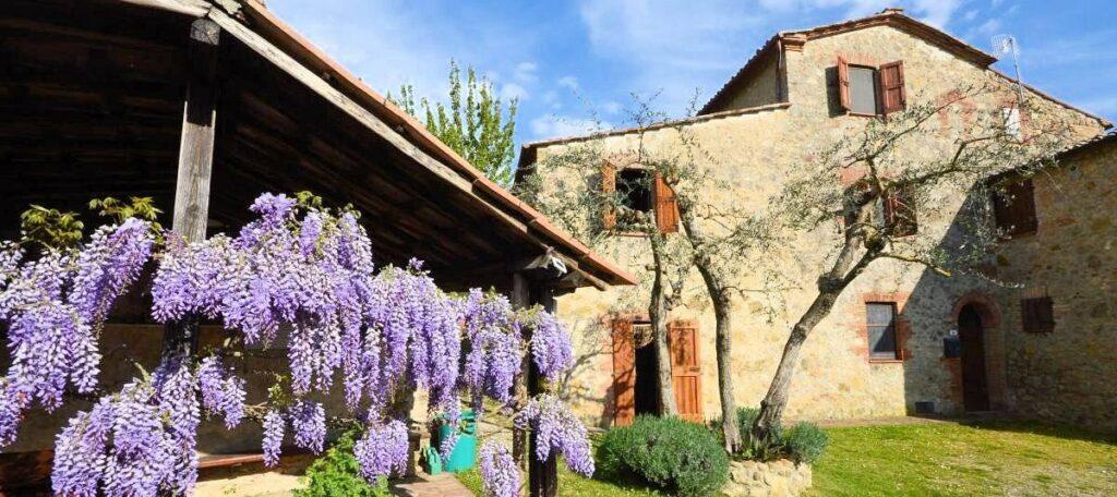 1241-Porzione di casolare con fienile oliveto e vigneto-Murlo-1 Agenzia Immobiliare ASIP